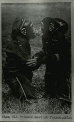 Two Chimps Dressed as Soldiers Kissing
