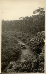 Automobile Driving on a Jungle Road