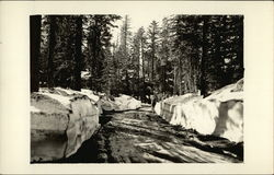 On the Road to Yosemite Valley - Giant Snow Banks
