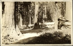 Redwood Basin - Big Trees, Cabin