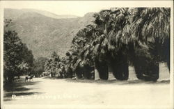 Avenue of Palm Trees