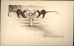 Two Black Cats on Fence With Jack O'Lantern