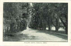 Willow Drive