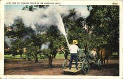 Spraying The Orange Trees In The Sunshine State