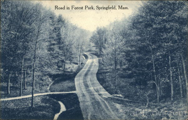 Road in Forest Park Springfield Massachusetts