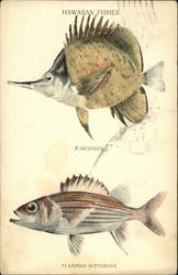 Illustrations of Hawaiian Fishes
