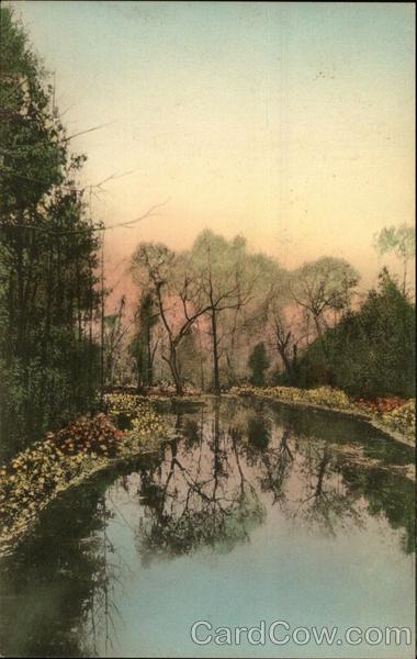 Cypress Gardens Charleston Sc Postcard