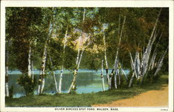 Silver Birches Spot Pond