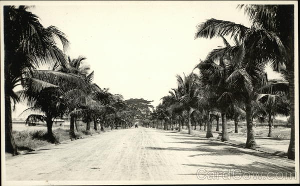 Palm Tree-Lined Road Philippines Southeast Asia
