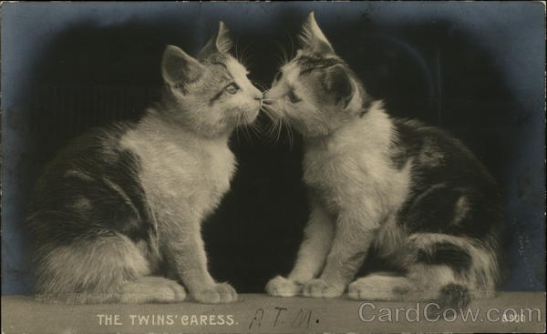 The Twins' Caress Cats