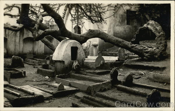 Cemetery with Spiraling Tree Algeria Africa