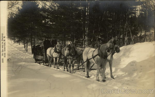 Horse Pulled Sleigh Through Snow on the Way to Conway Intervale New Hampshire