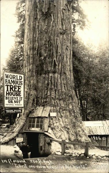 World Famous Tree House Trees Postcard