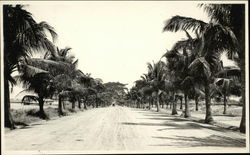 Palm Tree-Lined Road