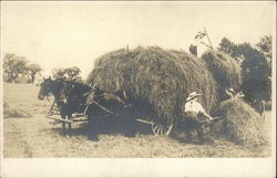 Harvesting the Hay