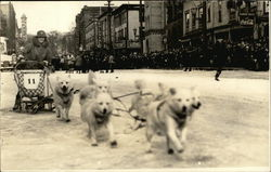 Sled Dogs Running in a Race