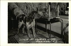 Dog Drach at St. Charles Hotel
