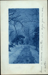 Snow Shoveled Pathway Lined with Trees