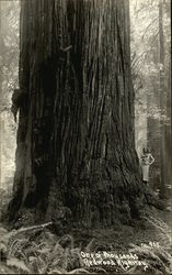 Woman standing by a Redwood Tree