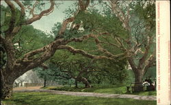 University of California, Berkeley - The Oaks