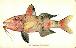 Hawaiian Fish Moano