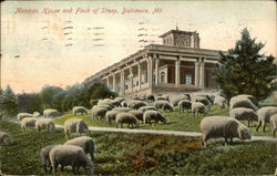 Mansion House and Flock of Sheep