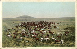 Herding Cattle in the West