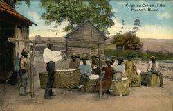 Weighing Cotton at the Planter's Home