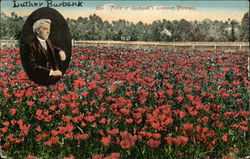 Field Of Burbank's Cromson Poppies