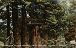 Lonesome Yer Surrounded by Giants Santa Cruz Big Trees California