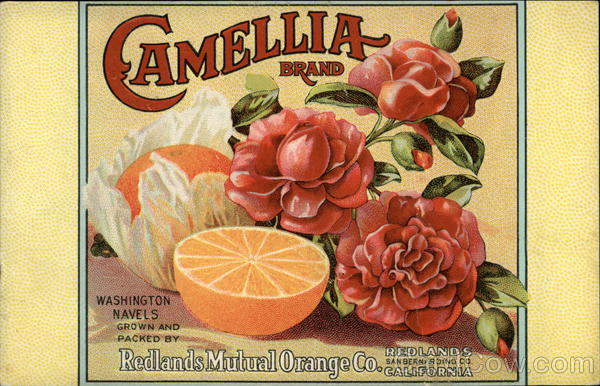 Advertisement for Camellia Brand Oranges with Flowers