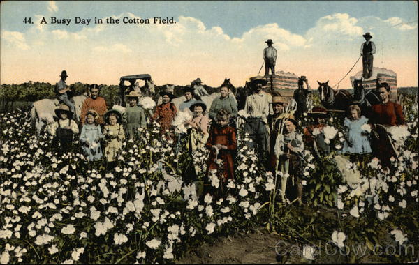 A Busy Day In The Cotton Field Black Americana