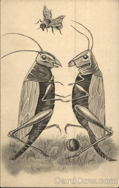 Two crickets and a bee