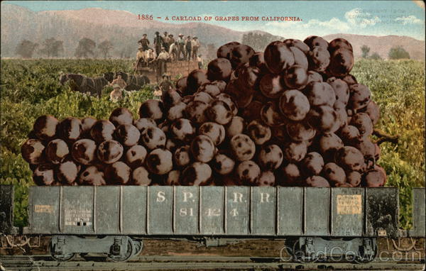 1886 - A Carload of Grapes From California Exaggeration