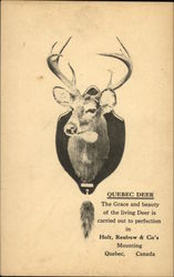 Head of a Quebec Deer mounted on a plaque
