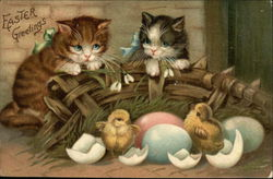 Two Kittens and Easter Chicks Hatching