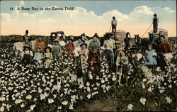 A Busy Day In The Cotton Field