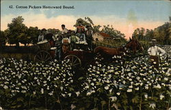 Cotton Pickers Homeward Bound