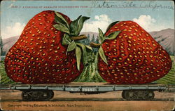 A Carload of Mammoth Strawberries from Watsonville California