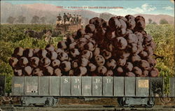 1886 - A Carload of Grapes From California