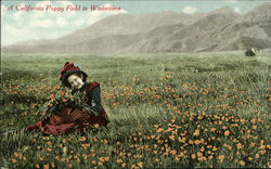 Californian Poppy Field In Winter