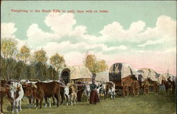 Freighting to the Black Hills in Early Days with Ox Train