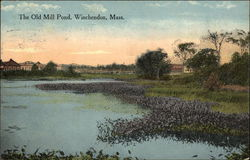 The Old Mill Pond