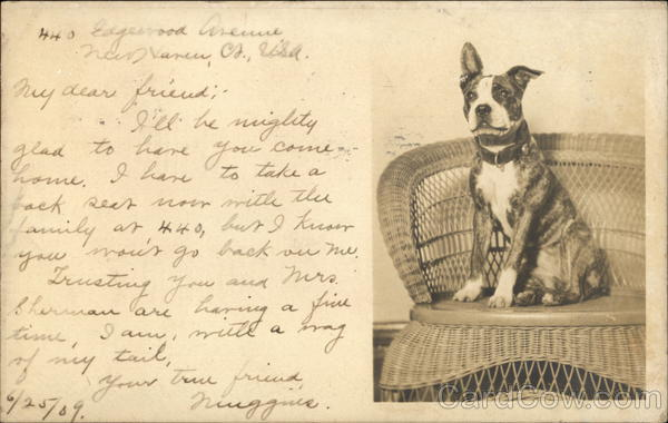 Bull Terrier Sitting on Wicker Chair Dogs