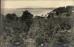 Scenic View of Trees and Waterfront in Maine
