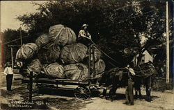 Men Hauling Giant Cabbage on Cart