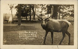 Visit the Bull Elk at Bill Myer's Park, Wshingtonville, PA