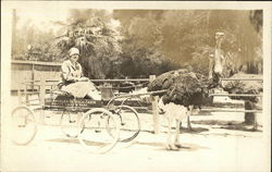 Ostrich Pulling Woman In A Cart, Los Angeles Ostrich Farm Postcard