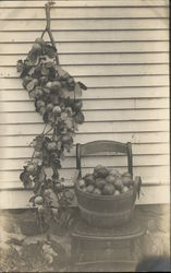 Basket of Fruit on Chair and Branch of Fruit Hanging