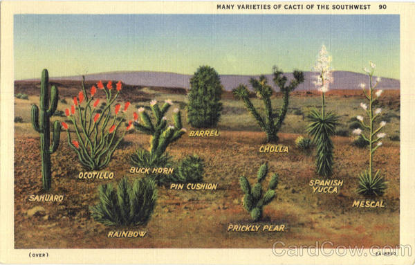 Many Varieties Of Cacti Of The Southwest Cactus & Desert Plants